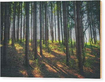 Peaceful Forest - Spring At Retzer Nature Center Wood Print by Jennifer Rondinelli Reilly - Fine Art Photography