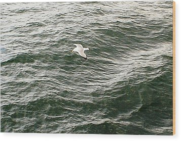Wood Print featuring the photograph Peaceful Gliding At Sea by Piety Dsilva
