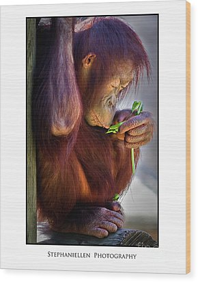 Peaceful Orangutan Wood Print by Stephanie Hayes
