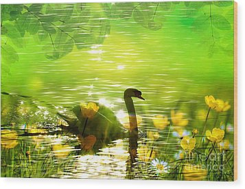 Peaceful Swan In Lake With Flowers Wood Print