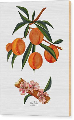 Peach And Peach Blossoms Wood Print by Anne Norskog