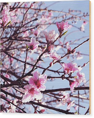 Peach Blossom Blowout Wood Print by DiDi Higginbotham