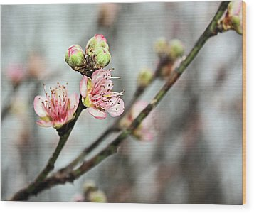 Peach Blossom Wood Print by Kristin Elmquist
