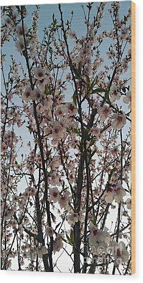 Peach Blossoms Wood Print by Diamante Lavendar