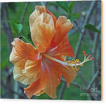 Peachy Hibiscus Wood Print by Larry Nieland
