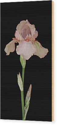 Peach Iris Wood Print by Michael Peychich