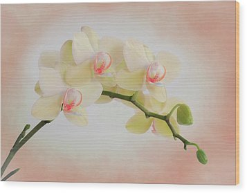 Peach Orchid Spray Wood Print