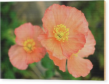 Wood Print featuring the photograph Peach Poppies by Sally Weigand