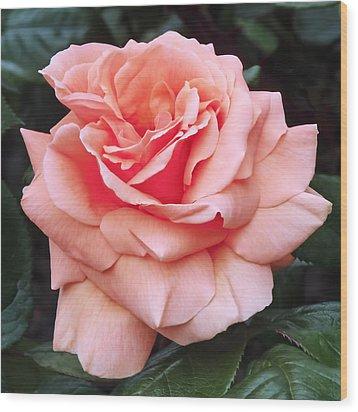 Peach Rose Wood Print by Rona Black