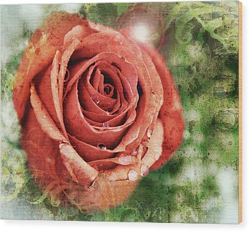 Peach Rose Wood Print by Sennie Pierson