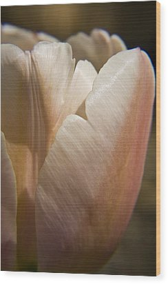 Peach Tulip Wood Print by Teresa Mucha