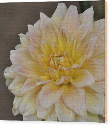Peaches And Cream Dahlia Wood Print