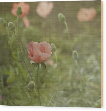Peachy Poppies Wood Print by Rebecca Cozart