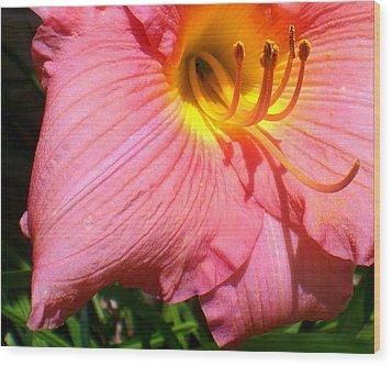 Peachy Shine Lily Wood Print by Cynthia Daniel