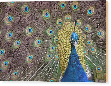 Peacock Display II Wood Print