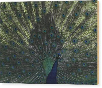 Peacock Eyes Wood Print by Michelle Miron-Rebbe