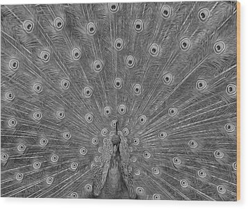 Wood Print featuring the photograph Peacock Fanfare - Black And White by Diane Alexander