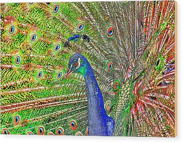 Peacock Fanned Tail Feathers Wood Print by Tracie Kaska