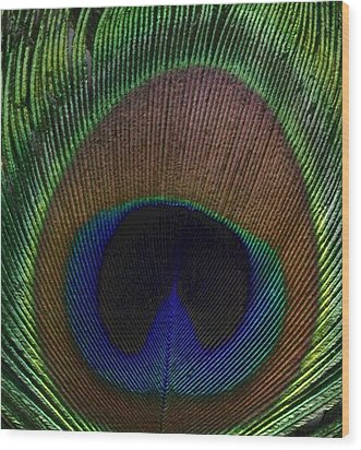 Peacock Feather Wood Print by Rebecca Shupp