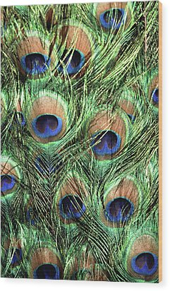 Peacock Feathers Wood Print by John Foxx