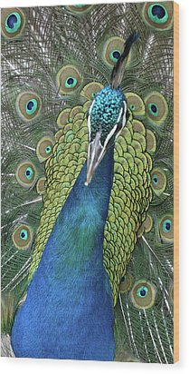 Wood Print featuring the photograph Peacock by Matthew Bamberg