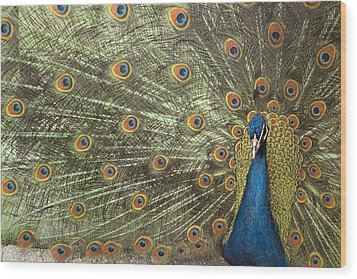Peacock Wood Print by Michael Hudson