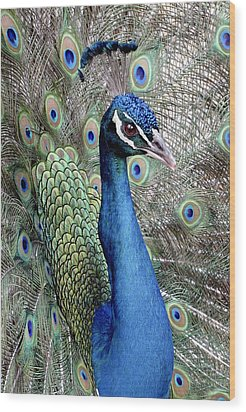 Peacock Portrait Wood Print by Bob Slitzan