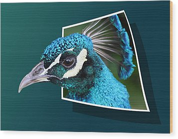 Peacock Wood Print by Shane Bechler
