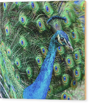 Wood Print featuring the photograph Peacock by Steven Sparks