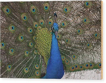 Peacock Strut Wood Print