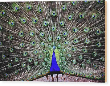 Wood Print featuring the photograph Peacock by Vivian Krug Cotton