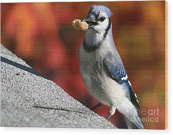 Peanut Snatcher Wood Print by Debra Straub
