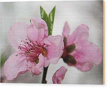 Plum Blossom Wood Print by Kristin Elmquist
