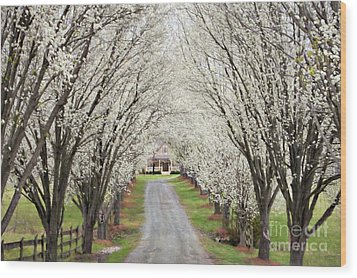 Wood Print featuring the photograph Pear Tree Lane by Benanne Stiens