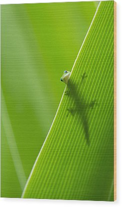 Peek A Boo Gecko Wood Print by Christina Lihani