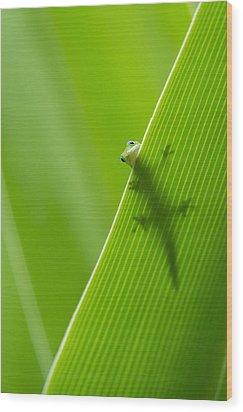 Peek A Boo Gecko Wood Print