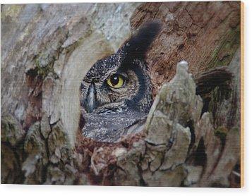 Peek A Boo Owl Wood Print