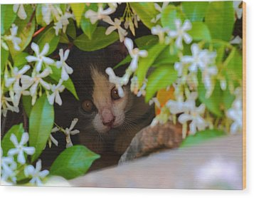 Wood Print featuring the photograph Peek-a-boo by Richard Patmore