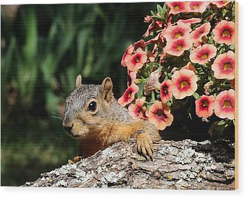 Peek-a-boo Squirrel Wood Print by Sheila Brown