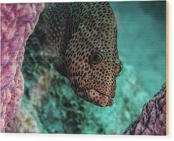 Peeking Coney Wood Print by Jean Noren
