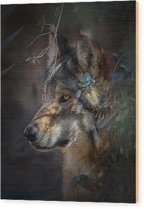 Peeking Out From The Shadows Wood Print by Elaine Malott