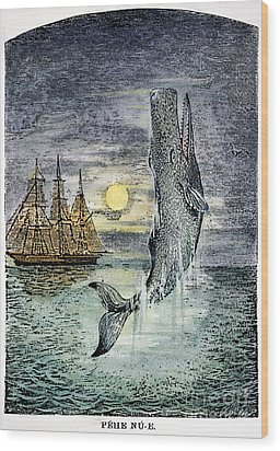 Pehe Nu-e: Moby Dick Wood Print by Granger