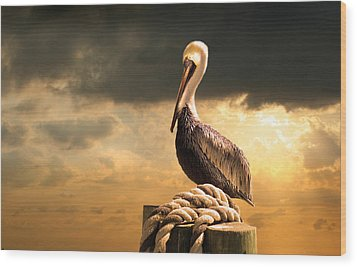 Pelican After A Storm Wood Print by Mal Bray
