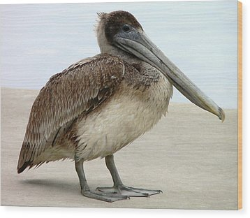 Pelican Close-up Wood Print by Al Powell Photography USA