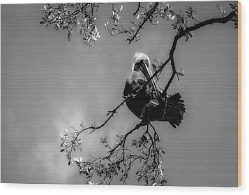 Pelican Connection Wood Print