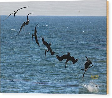 Pelican Dive 7 Photos In 2.5 Seconds Wood Print