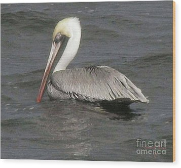 Wood Print featuring the photograph Pelican by Donna Brown