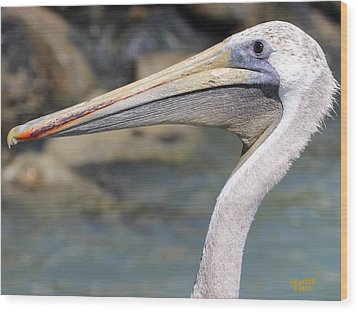 Pelican Face  That Only A Mother Could Love Wood Print