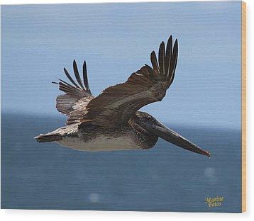 Pelican Flying Wings Up  Wood Print