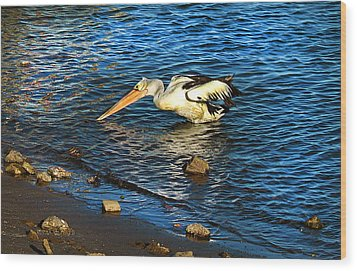 Pelican In Action Wood Print by Susan Vineyard
